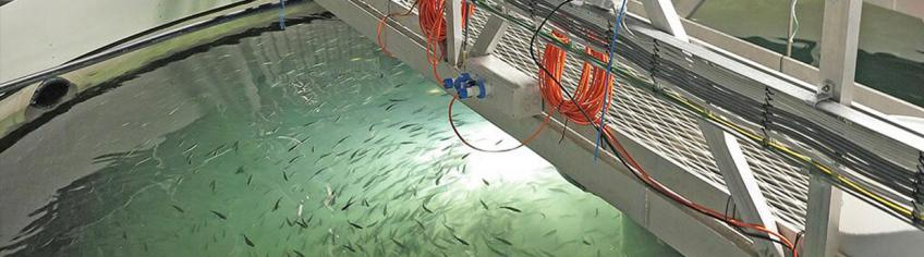 Delivering water treatment systems for offshore aquaculture and land-based facilities